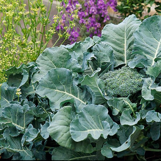 If you've never had a fall vegetable garden, you're missing a real treat. These 11 helpful tips are all you need to know to plan, plant, and enjoy the harvest from a fall vegetable garden in your yard.