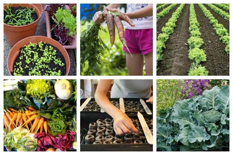 fall-vegetable-gardening-feature
