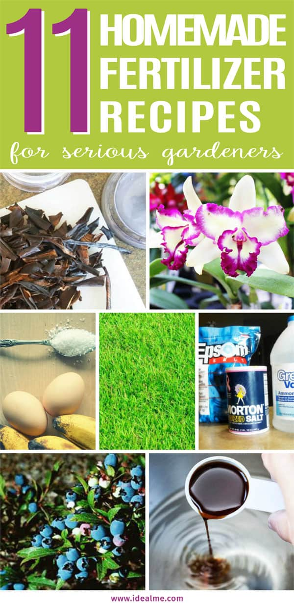 Homemade Fertilizer recipes for gardeners