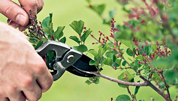 Proper Pruning - fall gardening tips