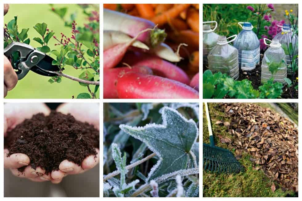 14 Brilliant Fall Gardening Tips And Ideas To Try This