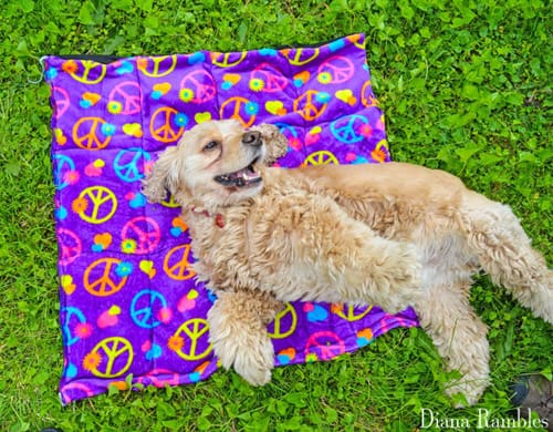 Cooling Mat - sew for your pets