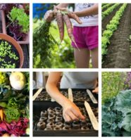 11 Helpful Tips for Planning a Spectacular Fall Vegetable Garden