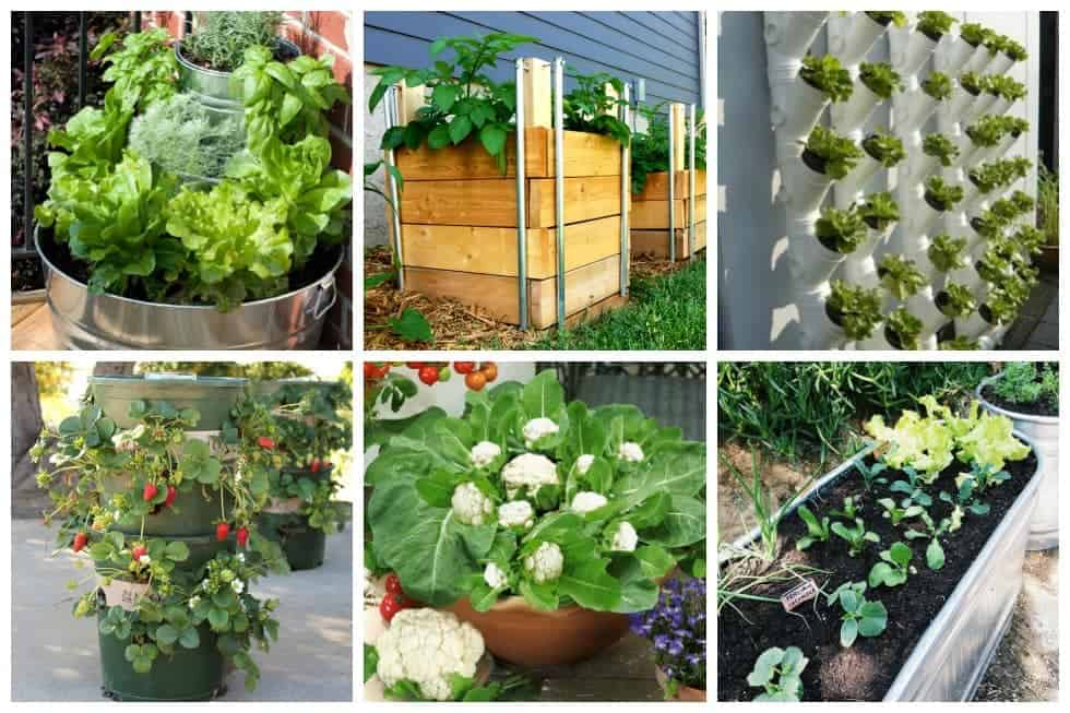 28 Tips For A Small Garden: 10 Easy Container Vegetable Garden Ideas For Your Yard