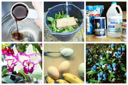These homemade fertilizer recipes for gardeners are perfect for all types of plants - whether you they are indoors, outdoors, fruit-bearing plants, or your lawn!