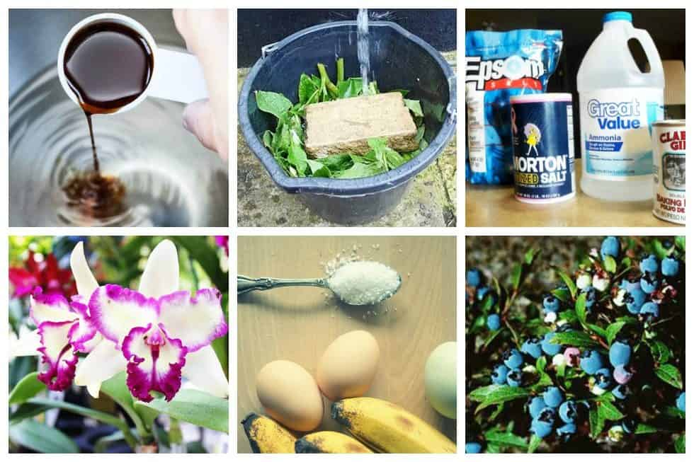 11 Homemade Fertilizer Recipes For